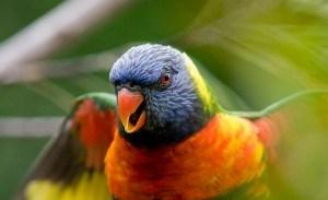 Попугай – воришка